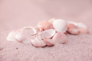 FW124 Sinton Seashell inspired by.....seashells